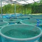 کاربرد اوزون در پرورش ماهی