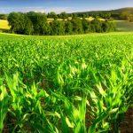 کاربرد اوزون در کشاورزی